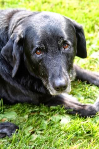Sadie 2000-2013