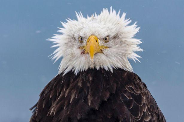 eagle-dreams-04