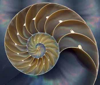 nautilus shell, sacred geometry, sacred spiral