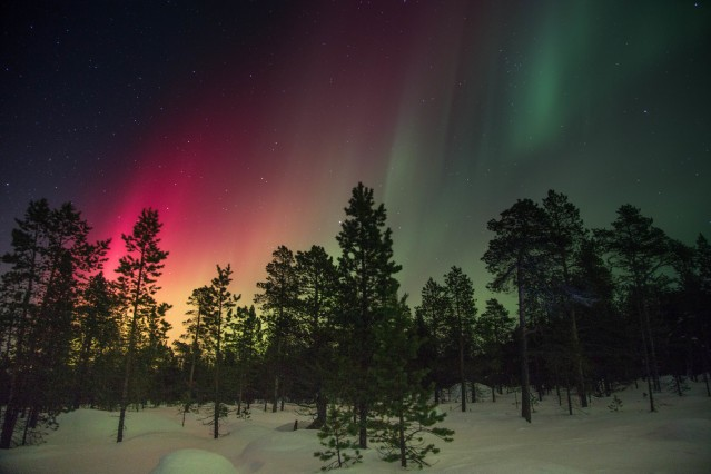 red and green northern lights over trees in snow