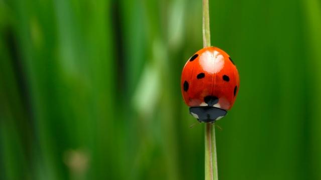 animals_hero_ladybug