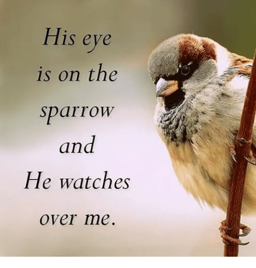 his-eye-is-on-the-sparrow-and-he-watches-over-12906778