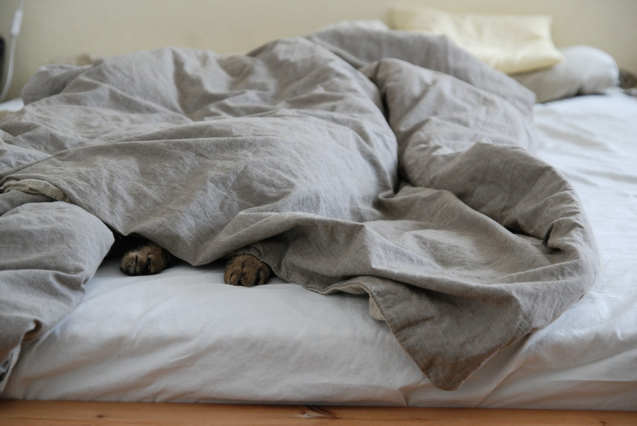 german shepherd under covers