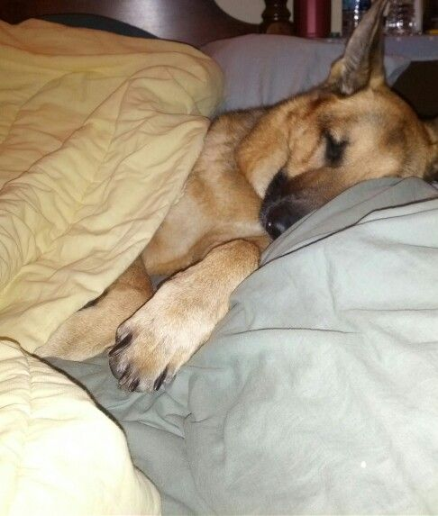 GSD under covers
