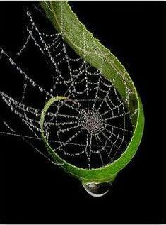 spiral spider web.jpg