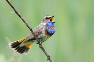 bird-language-song.jpg.653x0_q80_crop-smart