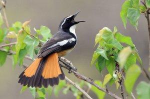 bird-singing-kruger-national-park-590x390