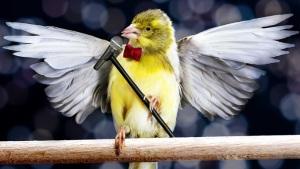 top ten birdsong