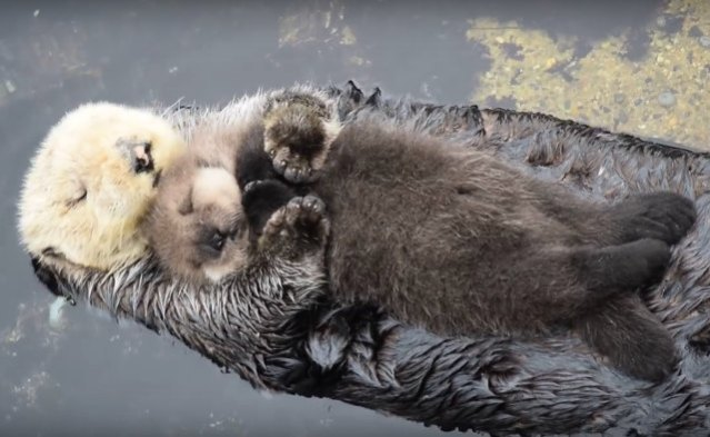 otter-family-sleeping