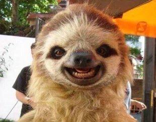 funny-happy-animals-sloth